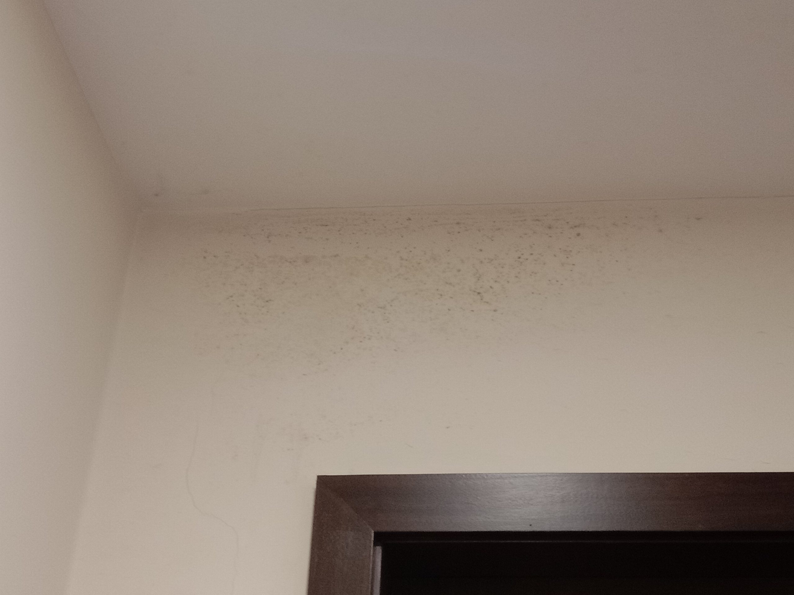 mold and spores